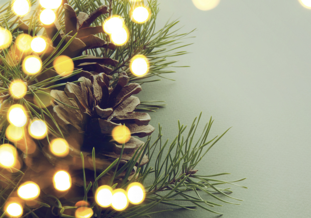 Pine needles and pinecones with bokeh lights